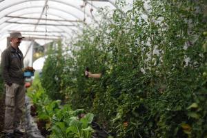 Oma maa tuottaa lähellä kasvatettua luomuruokaa