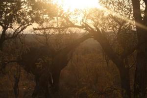 Norsu Krugerin kansallisupuistossa Mpumalangassa maan itäosassa. Kuva: Mira Luoma